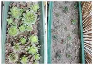 piante grasse con diversa crescita